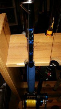 Blue Grouper 2